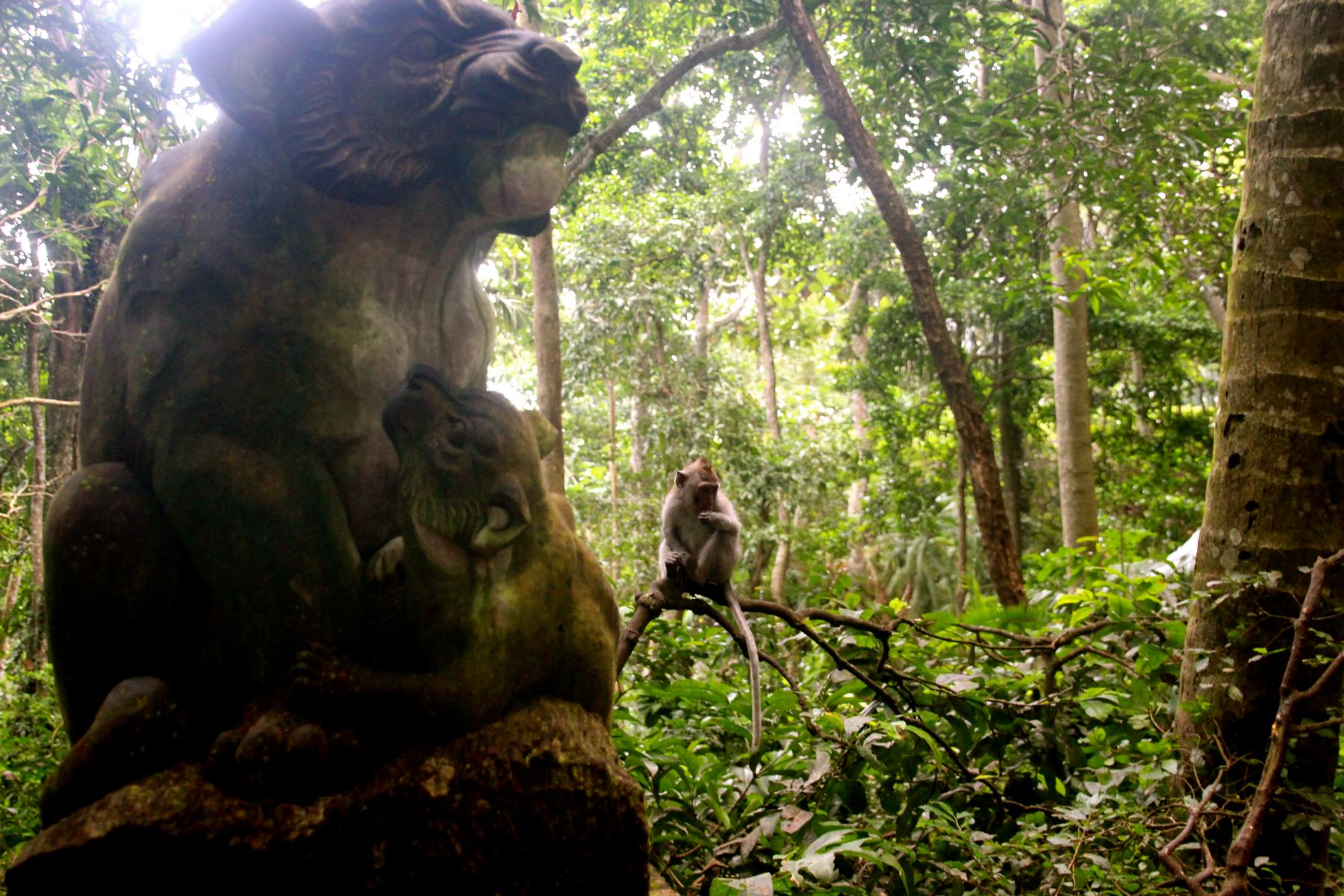 140718_8-Bali-3_Galerie-Monkey-Forest