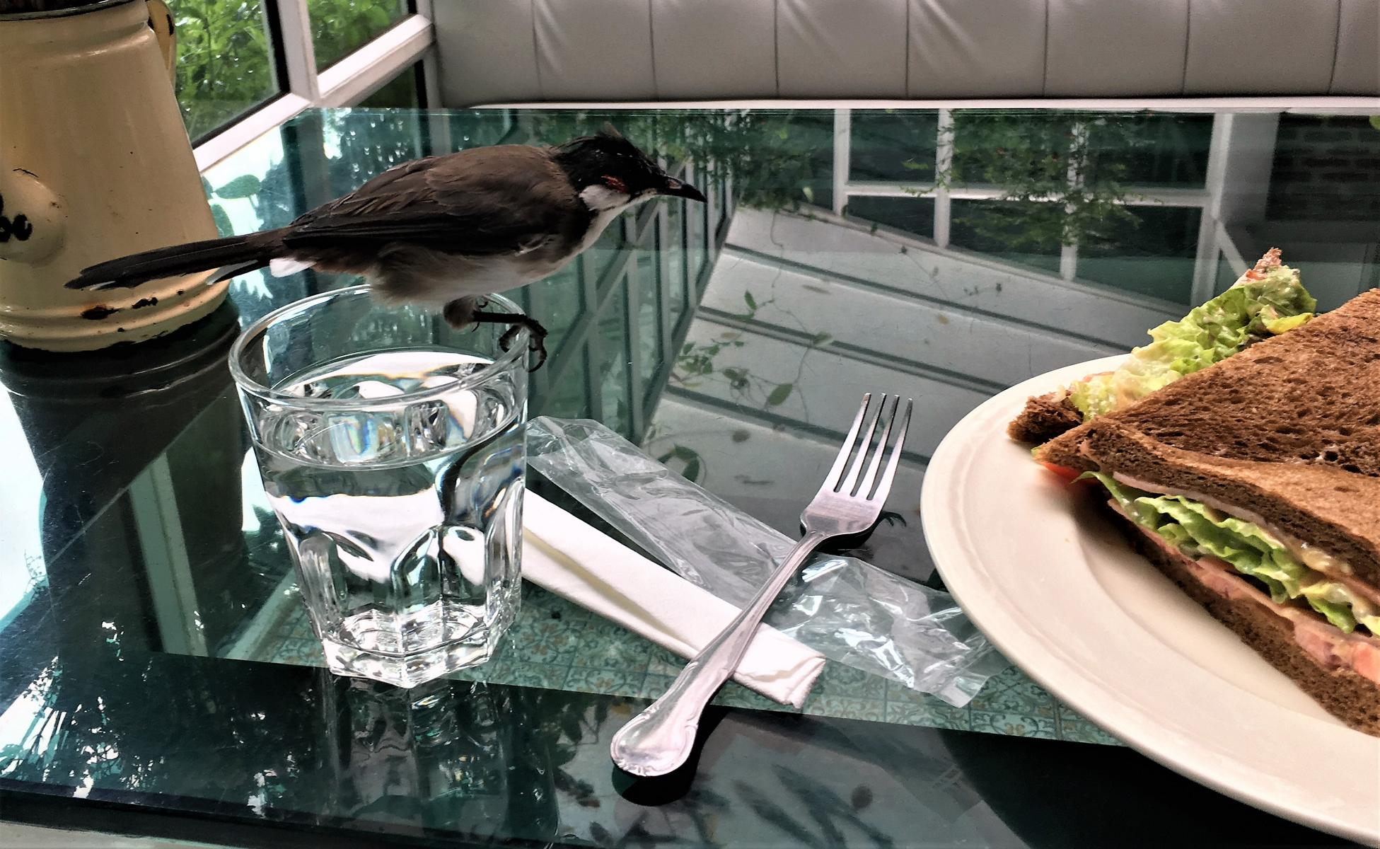 You`ll never eat alone – Brunch in Chiang Mai